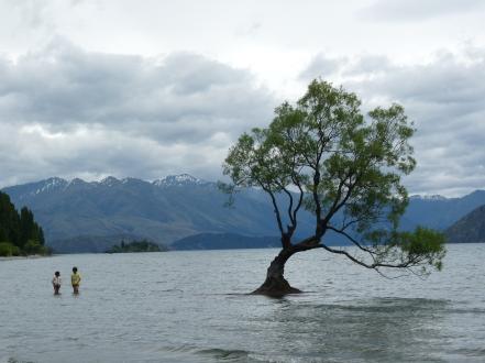 L'arbre de Wanaka