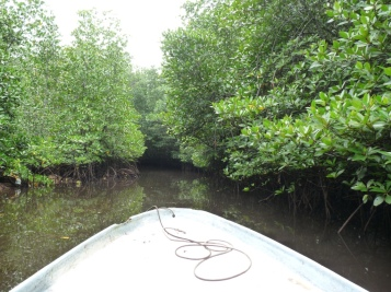 Au milieu d'une mangrove
